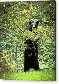 Our Bear Loves Apples Acrylic Print