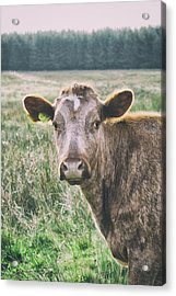 Out In The Fields Acrylic Print