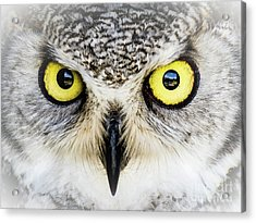 Owlsome Acrylic Print