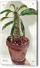 Pachypodium Acrylic Print by Donald Maier
