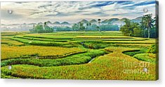 Paddy Rice Panorama Acrylic Print by MotHaiBaPhoto Prints