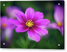 Painted Daisy Acrylic Print by June Marie Sobrito