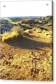 Painted Desert 2 Acrylic Print by Patricia Bigelow