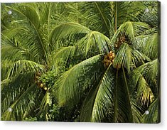 Palm Trees Acrylic Print by Vanessa Devolder