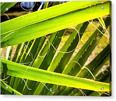 Acrylic Print featuring the painting Palmetto 3 by Renate Nadi Wesley