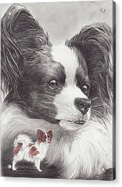 Papillon Acrylic Print by Laurie McGinley