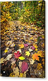 Path In Fall Forest Acrylic Print by Elena Elisseeva