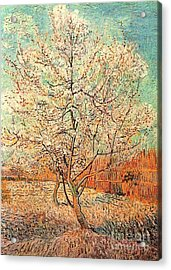 Peach Tree In Blossom Acrylic Print by Vincent Van Gogh