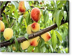 Acrylic Print featuring the photograph Peaches by Kristin Elmquist