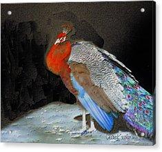 Peacock II Acrylic Print by Chuck Kugler