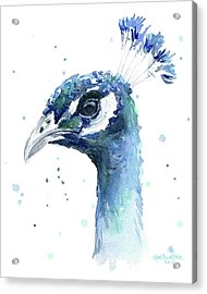 Peacock Watercolor Acrylic Print by Olga Shvartsur