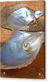 Pearl In Oyster Shell Acrylic Print