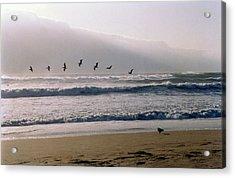 Pelican Brief Acrylic Print by Brande Barrett