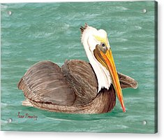 Pelican Floating Acrylic Print by Anne Beverley-Stamps