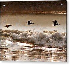Pelican Patrol Acrylic Print