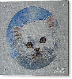 Persian Kitten Acrylic Print