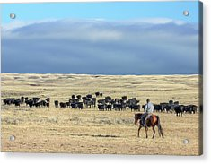 Driving The Herd Acrylic Print by Todd Klassy