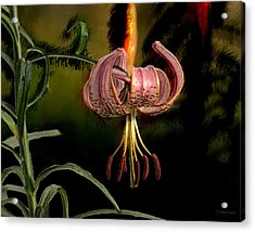 Pink Asiatic Lily Acrylic Print by Joe Halinar