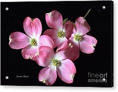 Pink Dogwood Branch Acrylic Print by Jeannie Rhode