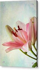 Pink Lilies Acrylic Print by Nailia Schwarz