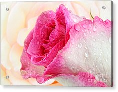 Pink Acrylic Print by Mark Johnson