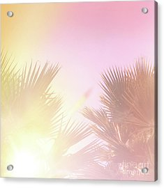 Acrylic Print featuring the photograph Pink Palms 2 by Cindy Garber Iverson