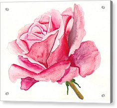 Pink Rose Acrylic Print by Robert Thomaston