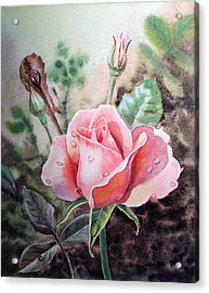 Acrylic Print featuring the painting Pink Rose With Dew Drops by Irina Sztukowski