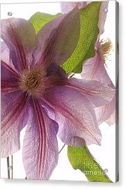 Pink Tenderness Acrylic Print by Valia Bradshaw