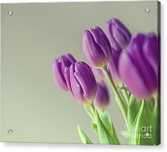 Pink Tulips Acrylic Print by Patricia Hofmeester