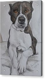 Pit Bull Acrylic Print by Janet Butler
