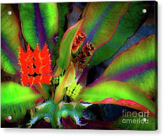 Acrylic Print featuring the photograph Plants And Flowers In Hawaii by D Davila
