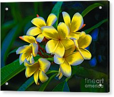 Acrylic Print featuring the photograph 1- Plumeria Perfection by Joseph Keane
