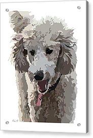Poodle Portrait II Acrylic Print by Kris Hackleman