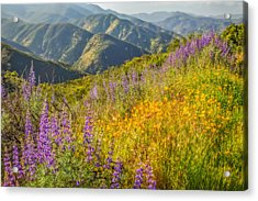 Poppies And Lupine Acrylic Print by Marc Crumpler