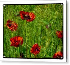 Poppies Acrylic Print by Hugh Smith