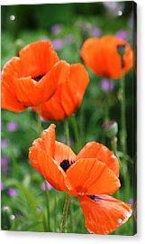 Poppies Acrylic Print by Melanie Beasley