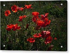Poppies Acrylic Print by Svetlana Sewell