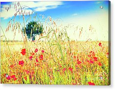 Poppies With Tree In The Distance Acrylic Print