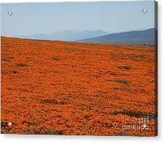 Poppy Field II Acrylic Print by Suzette Kallen