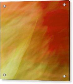 Portulaca II Acrylic Print