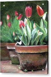 Acrylic Print featuring the painting Potted Tulips by Cindy Plutnicki