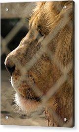 Profile Of A King Acrylic Print