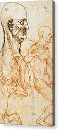 Proportions Of The Face  Acrylic Print by Leonardo Da Vinci