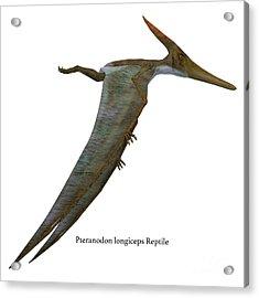 Pteranodon Reptile Side Profile Acrylic Print