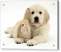 Puppy And Bunny Acrylic Print