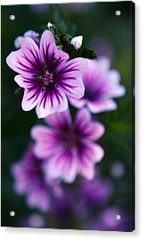 Purple Beauties Acrylic Print