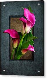 Purple Calla Lily Acrylic Print