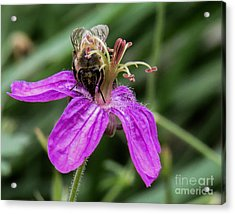 Purple Flower 3 Acrylic Print