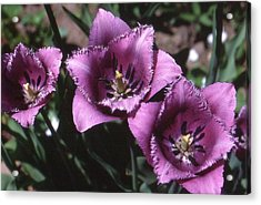 Purple Flowers Two  Acrylic Print by Lyle Crump